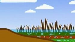 Ontstaan van hoogveen: Dode planten maken nieuwe grond