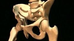 Geraamte been: Wist je dat het zwaarste bot uit je lichaam in je been zit?