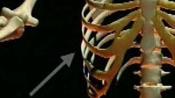 Geraamte bovenlichaam: Welke botten zitten er tussen je borst en je hoofd?