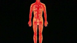 Bloedsomloop: Een uitleg van de bouw en de functie van hart en bloedvaten