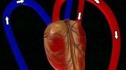 Hart- en bloedvaten: Waar begint de bloedsomloop?