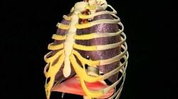 Ademhaling: De hele dag haal je adem. Maar wat gebeurt er dan eigenlijk in je lichaam?