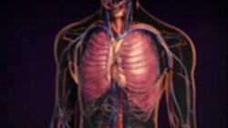 Bio-Bits onderbouw: Mens en lichaam: Erfelijkheid