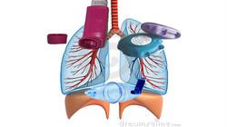 Bio-Bits onderbouw: Mens en lichaam: Ademhaling