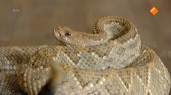 Huisje Boompje Beestje: Slangen