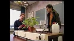 Bio-bits vmbo: planten: Bladeren