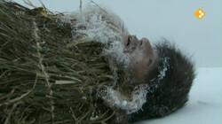 Vroeger & Zo: Ötzi de ijsmummie