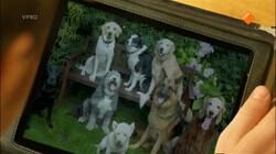 Pieter in de prehistorie: Hond