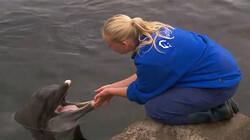 Hoe slapen dolfijnen?: Slapen en zwemmen tegelijk