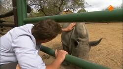 Freeks wilde wereld: De witte neushoorn