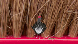 1 minuutje natuur: Luisteren naar vogelgeluiden