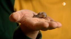 Huisje Boompje Beestje: Slakken