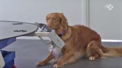 EenVandaag in de klas: Honden sporen darmkanker op