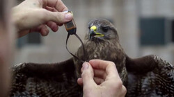 Dierenbescherming met satellieten: Dieren in kaart brengen met gps