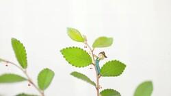 1 Minuutje natuur: De oude kersenboom