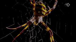 Micro Monsters in de klas: Het jagersinstinct van de spin