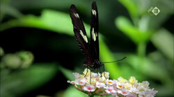 Micro Monsters in de klas: Vlinders