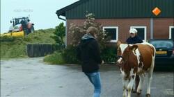 Zapp Echt Gebeurd: Een koe in een verkeerd lichaam