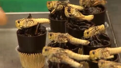 Kun je insecten eten?: Clipje uit Studio Snugger
