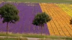 Wereldwijde handel in bloemen: Een 'Nederlands boeket'?