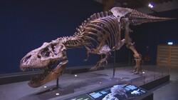 Een groot skelet van een T-Rex: Dino Trix staat in Naturalis