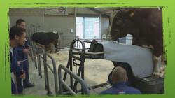 De Buitendienst: Hoe ontwerp je een dier?