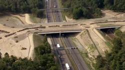 Ecoduct: Een snelweg voor dieren