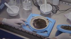 Wat is een poeptransplantatie?: Gezonde poep kan ziektes genezen