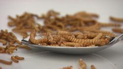 Kun je insecten eten?: Voedzaam en best lekker