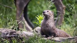Vroege Vogels in de klas: De otter en de bever