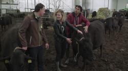 Wat zijn wagyu-koeien?: Koeien zonder stress