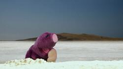 Molletje op zoek naar zout: Waar is Molletje?
