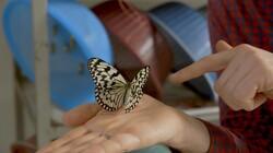 Keuringsdienst van Waarde in de klas: Vlinders