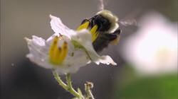Wat zijn pollen?: Poeder uit bomen dat hooikoorts veroorzaakt