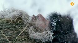 HistoClips: Ötzi de ijsmummie