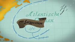 Waar komt paling vandaan?: Geboren in de Sargassozee