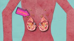 Wat gebeurt er in je lichaam bij een spreekbeurt?: Spanning door de stresshormonen