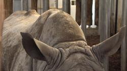 Hoe verzorg je de huid van een neushoorn?: Poetsen en sprayen