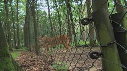 Veiligheidsmaatregelen in de dierentuin: Wat gebeurt er als er een gevaarlijk dier ontsnapt?