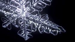 Hoe ziet een sneeuwvlok eruit onder de microscoop?: Kristallen van ijs