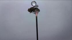 Hoe overleeft een mug een regenbui?: Waterbommen uit de lucht