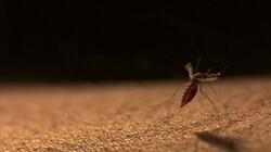 Hoe vliegt een mug als hij zwaar is van het bloed?: Stuntelend opstijgen met jouw bloed