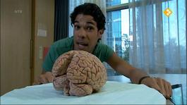 Het Klokhuis - Epilepsie