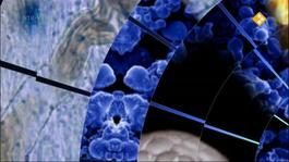 Labyrint Tv - Onze Biologische Klok