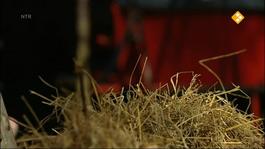 Koekeloere - Hop Hop, Paardje