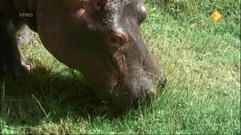 Freek Op Safari - Nijlpaarden/worstboomvrucht