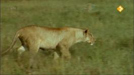 De Buitendienst Van Nieuws Uit De Natuur - Katten