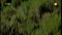 Zembla - De Panda Onder Vuur