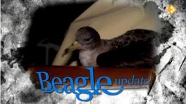 Beagle Updates - Het Ei