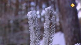 Koekeloere - De Eenzame Sneeuwpop